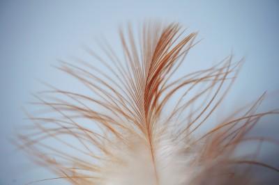 Una pluma suave