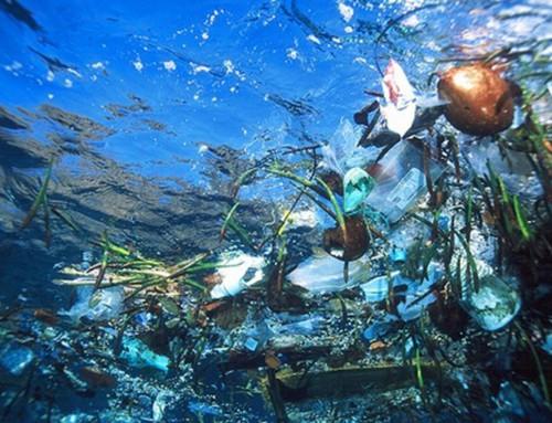 Tela de Plástico Reciclado
